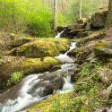 Scenic Photo at Kiesse Creek Lodge at Bear Lake Reserve
