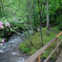 Scenic Photo at Moonshine Creek Campground & Cabins