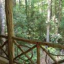 Scenic Photo at Sportsman Cabin - Cabin in the Laurel